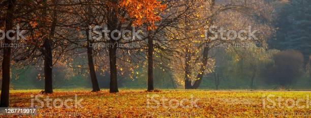 Photo of Panoramic Nature Autumn landscape