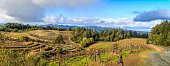 A panoramic of Napa valley vineyards late in the afternoon with fluffy white clouds, trees and a road to the right side.