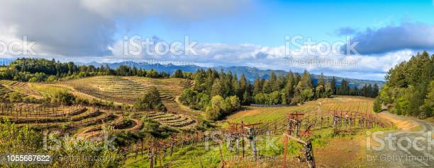 Photo of A Panoramic of a Terraced Vineyard