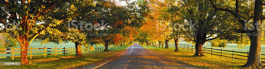 XXXL: Panoramic of early autumn trees at sunrise - Royalty-free Agricultural Field Stock Photo