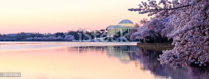 Panoramic of the Thomas Jefferson memorial in the early morning.  The Japanese Cherry Trees in their spring time peak bloom.
