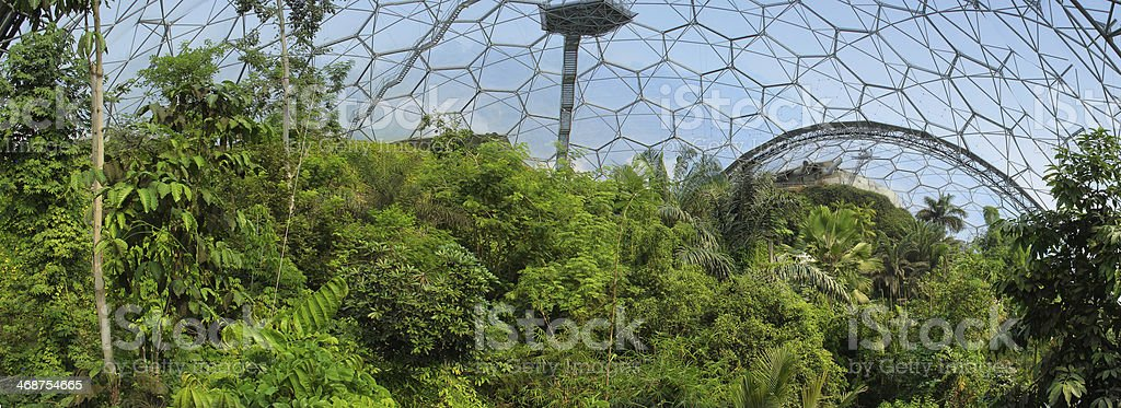 Panoramic of Tropical jungle Biome royalty-free stock photo