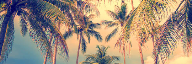 Panoramablick Palmen Hintergrund, Vintage-Stil Prozess – Foto