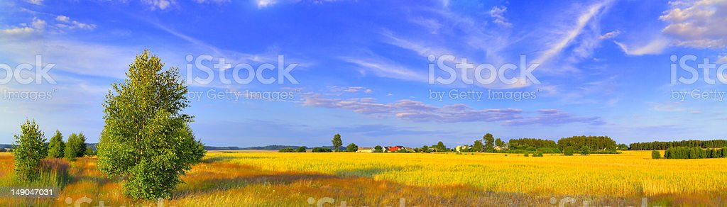 Panoramic rural landscape with birch and picturesque sky royalty-free stock photo