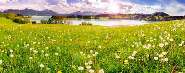 panorama-szene mit see forggensee und alpen berge in der region allgäu, bayern, im frühjahr - allgäu stock-fotos und bilder