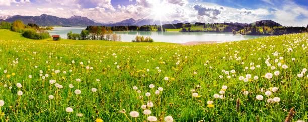 panorama-szene mit see forggensee und gebirge in der region allgäu in bayern - regierungsbezirk schwaben stock-fotos und bilder