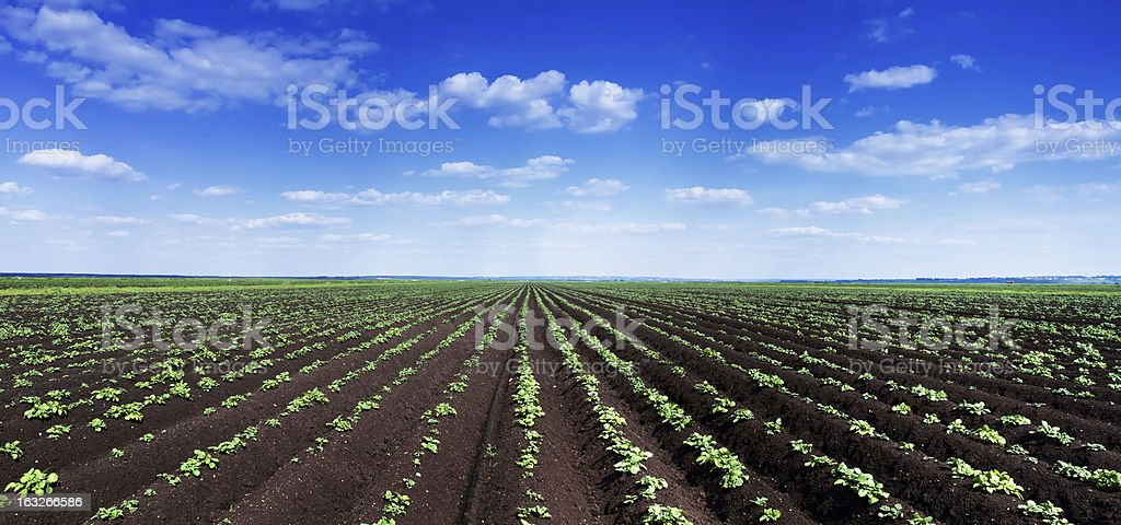 Panoramic shot of farm field. royalty-free stock photo
