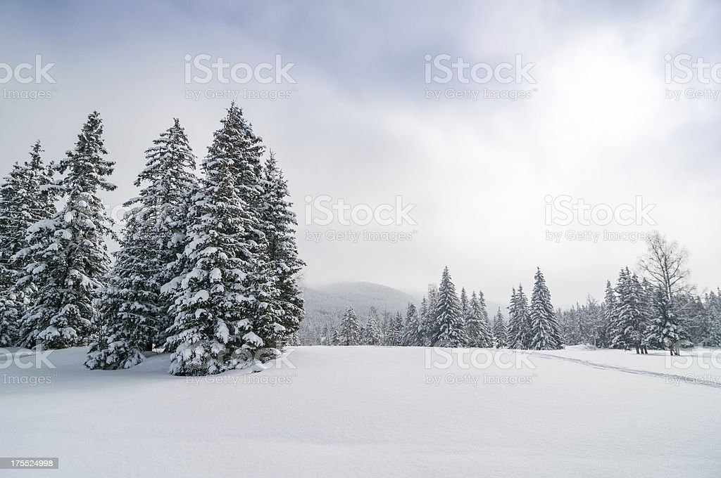 Panoramic snowy winter forest landscape stock photo