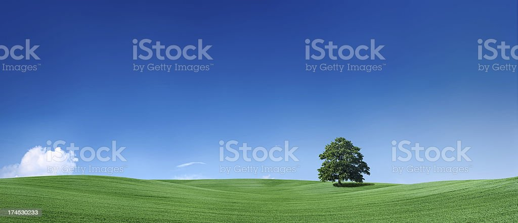 Panoramic spring landscape 42MPix, XXXXL size royalty-free stock photo