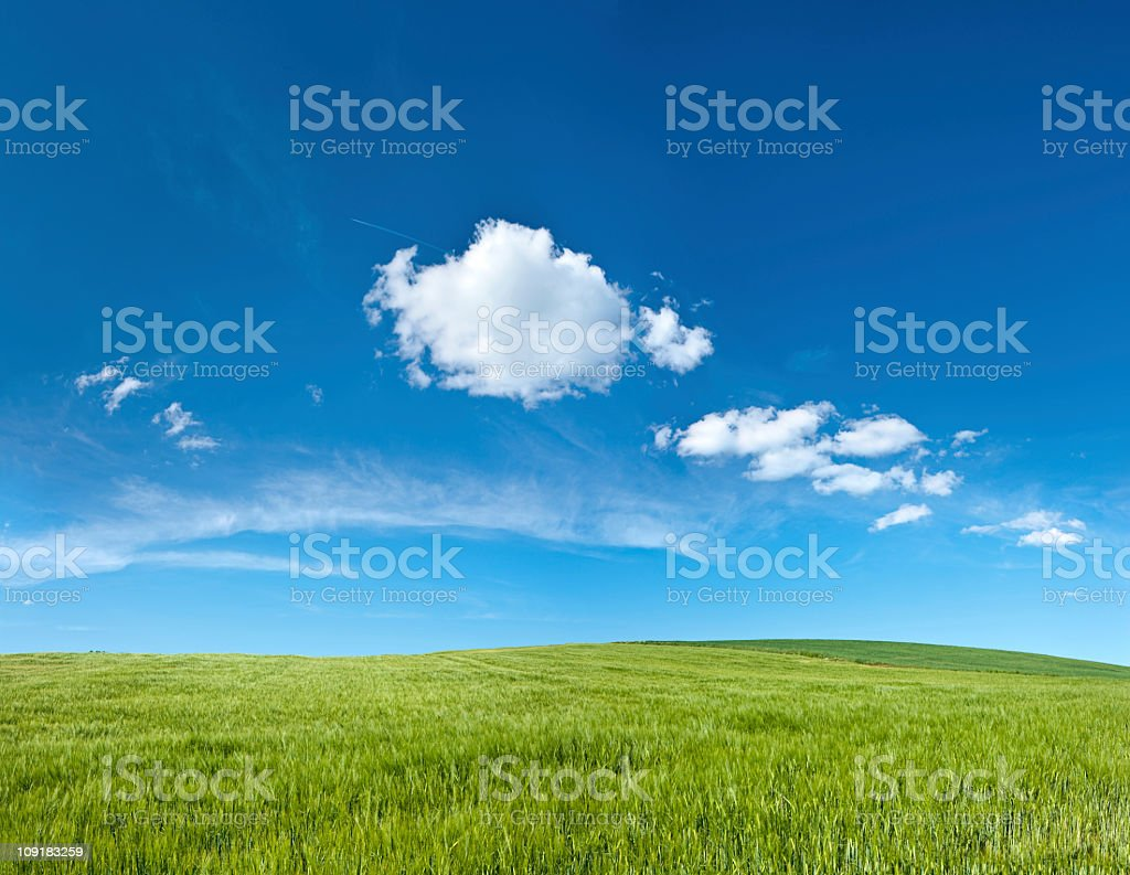Panoramic spring landscape 54MPix XXXXL - meadow, blue sky, clouds royalty-free stock photo