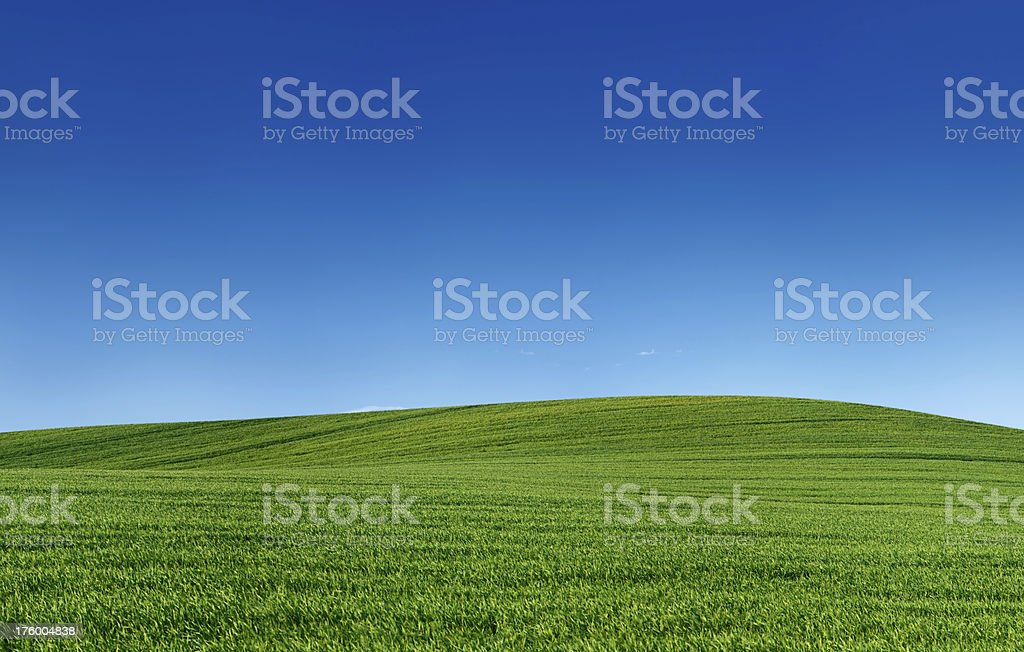 Panoramic spring landscape 55MPix XXXXL - meadow, blue sky royalty-free stock photo