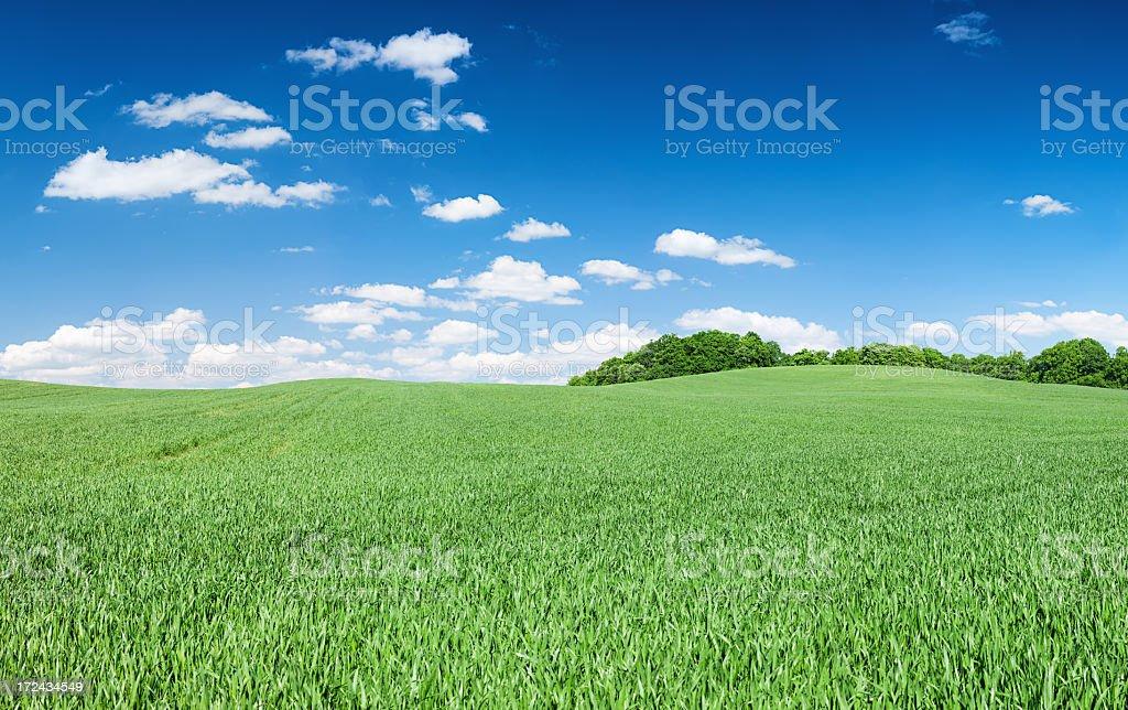 Panoramic spring landscape 67MPix XXXXL - meadow, blue sky royalty-free stock photo