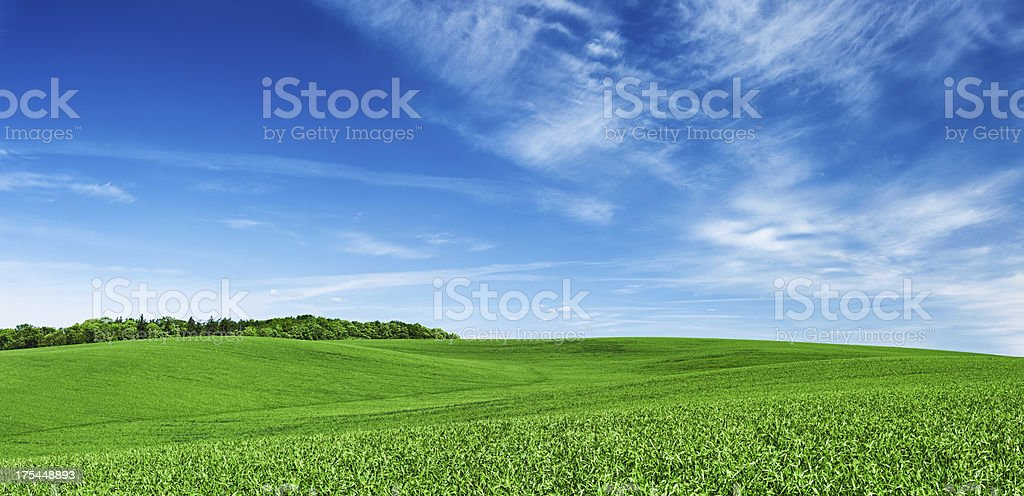 Panoramic spring landscape XXXXL 28 MPix- green field, blue sky stock photo