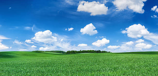 Panoramic spring landscape XXXXL 60 MPix- green field, blue sky stock photo