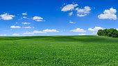 istock Panoramic spring landscape XXXXL 75 MPix - green field, blue sky 1212092563