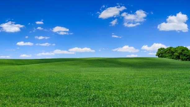 Panoramic spring landscape XXXXL 75 MPix - green field, blue sky stock photo
