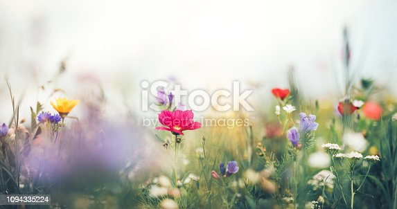 Panoramic summer meadow full of colorful flowers.