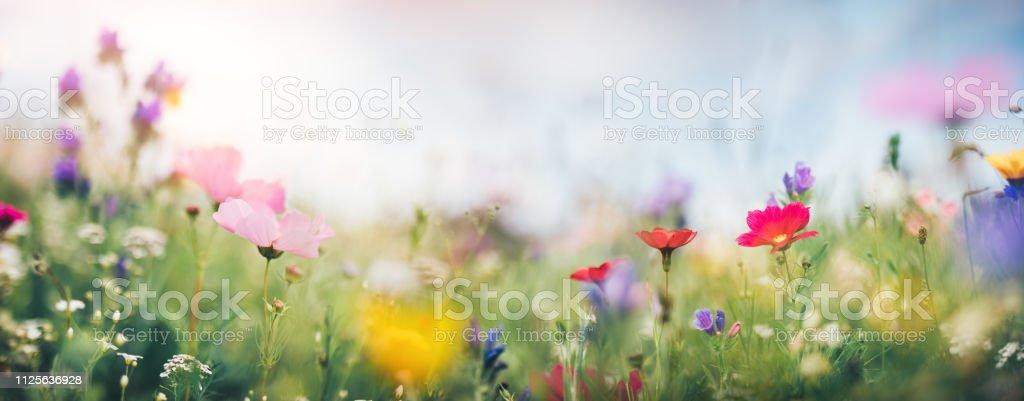 Panoramic Summer Meadow stock photo