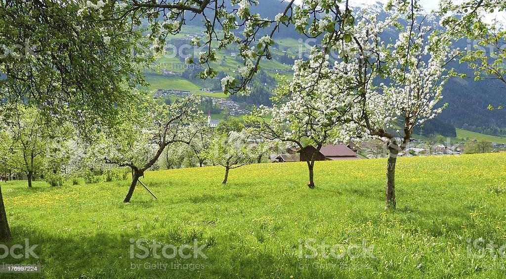 Panorama Baum Blüte im Frühjahr – Foto