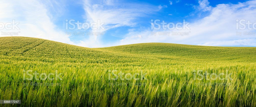Panoramic Tuscany Field stock photo