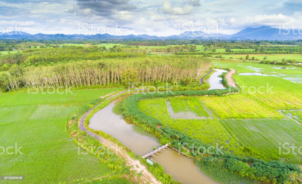 Panoramic view nature Landscape of a green field with rice royalty-free stock photo