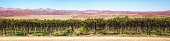 Panoramic view of a Namibian vineyard in the southern area with a mountain range in the background