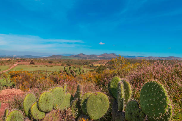 Panoramic view of a natural landscape stock photo