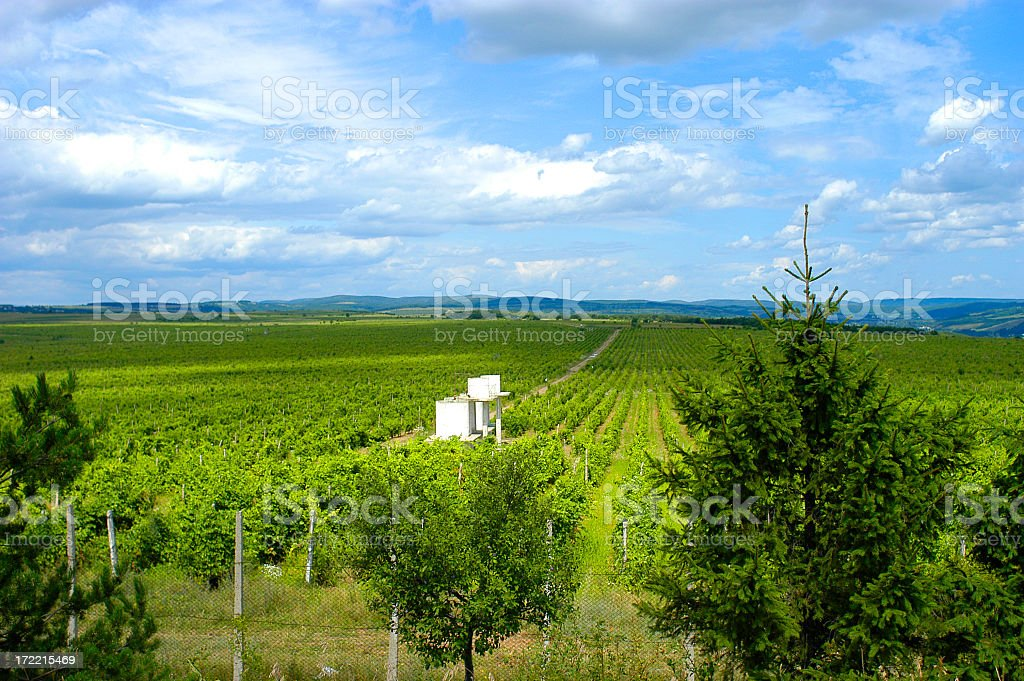 Panoramic view of a Romanian vineyard royalty-free stock photo