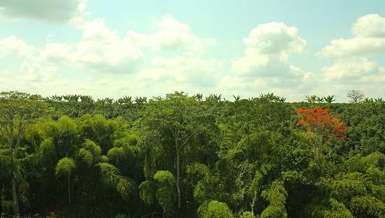 Panoramic view of a tropical forest, between the Andes mountain ranges. Green jungle landscape. Sierra Nevada National Park of Santa Marta. Colombia