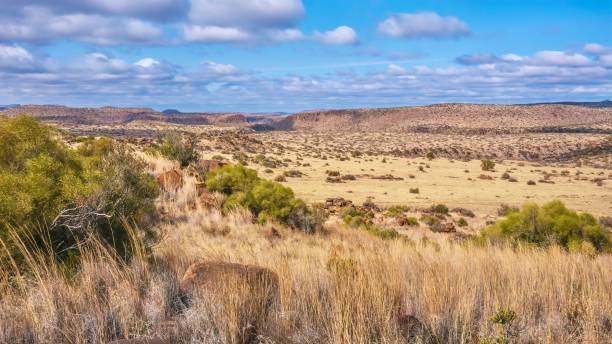 a panoramic view of a typical landscape in the great karoo region in south africa, including its flat topped hills known as karoo koppies. near philippolis, free state. - półpustynny zdjęcia i obrazy z banku zdjęć
