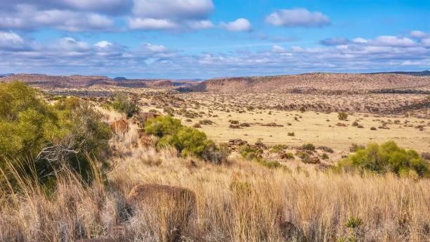 ein panoramablick auf eine typische landschaft in der region groß karoo in südafrika, einschließlich der flachen hügel, die als karoo koppies bekannt sind. in der nähe von philippolis, freistaat. - afrikanische steppe dürre stock-fotos und bilder
