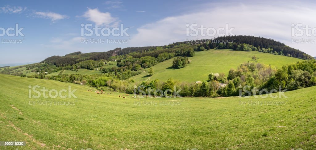 Panoramic view of amazing spring landscape with herd of cows royalty-free stock photo
