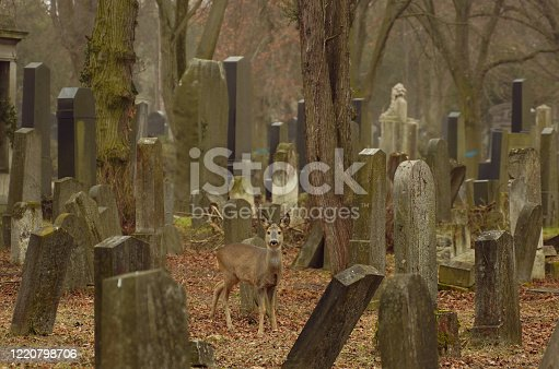 Old Jewish cemetery in Dukla, southeast of Poland
