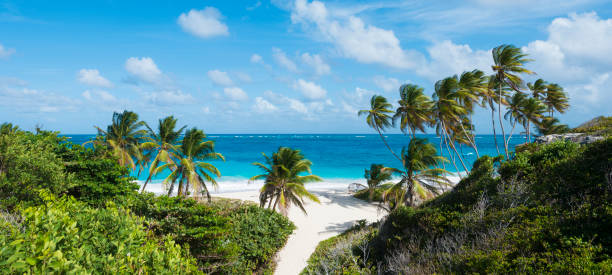 Panoramic View of Bottom Bay Beach and Palm Trees in Barbados stock photo