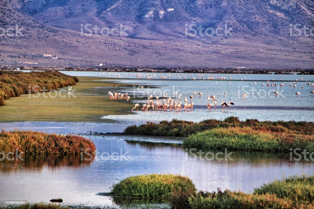 Panoramic view of Cabo de Gata wetlands with pink flamingos in the background stock photo