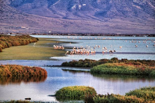 Panoramic view of Cabo de Gata wetlands with pink flamingos in the background – zdjęcie