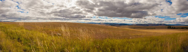 Panoramic View of Clouds over Wheat Field stock photo