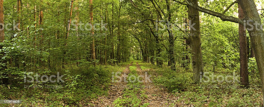 Panoramic view of deep forest XXL size royalty-free stock photo