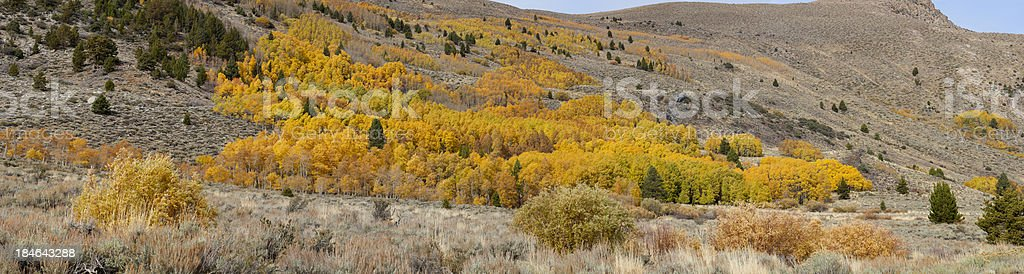 Panoramic View of Fall Colors stock photo