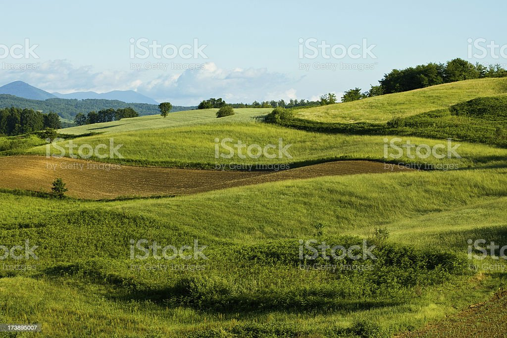 Panoramic view of field and green meadows royalty-free stock photo
