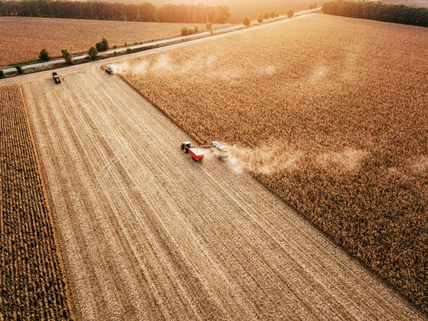 Panoramic view of fields at harvest Aerial view of combine harvesting ripe wheat monoculture stock pictures, royalty-free photos & images