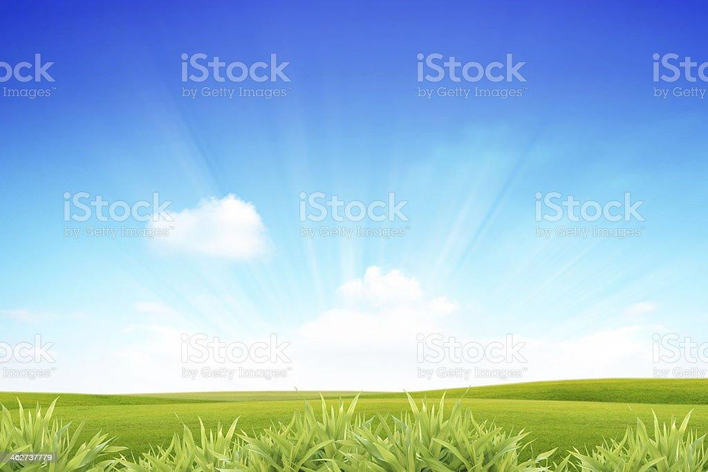 Panoramic view of green field stock photo
