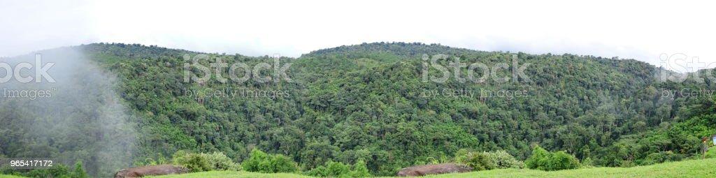 Vue panoramique du paysage de la montagne verte en été. - Photo de Arbre libre de droits