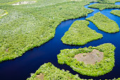 Mangroves along a south Florida coastline.  Taken from a helicopter at 500 feet.