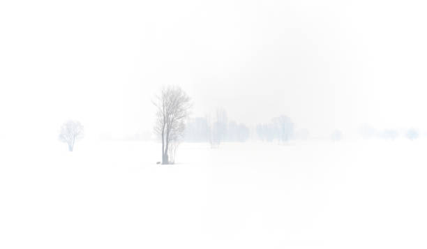 Panoramic view of snowy landscape with trees. stock photo