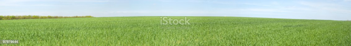 Panoramic View Of Spring Meadow Stock Photo & More Pictures of Abstract