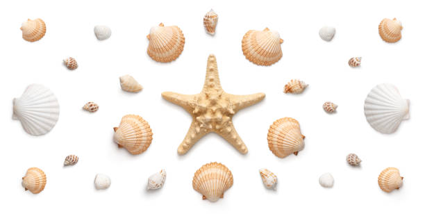 panoramic view of starfish and seashells isolated on white background - climate clock imagens e fotografias de stock