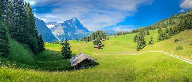 panoramic view of swiss alps with cottage houses at the foot of the alpine in grindelwald, switzerland - швейцарские альпы стоковые фото и изображения