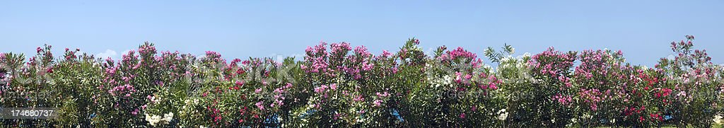 Panoramic view of the flower plants royalty-free stock photo