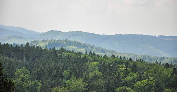 Panoramic view of the forest in Karlovy Vary, Czech Republic – Foto